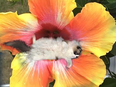 Flowerkitty