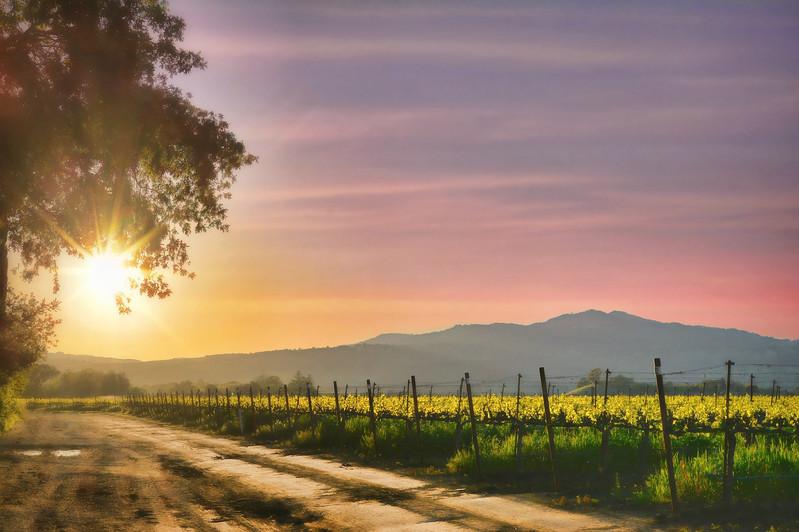 Suisun Valley Sunset