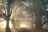 Cypress Tree Sunrise