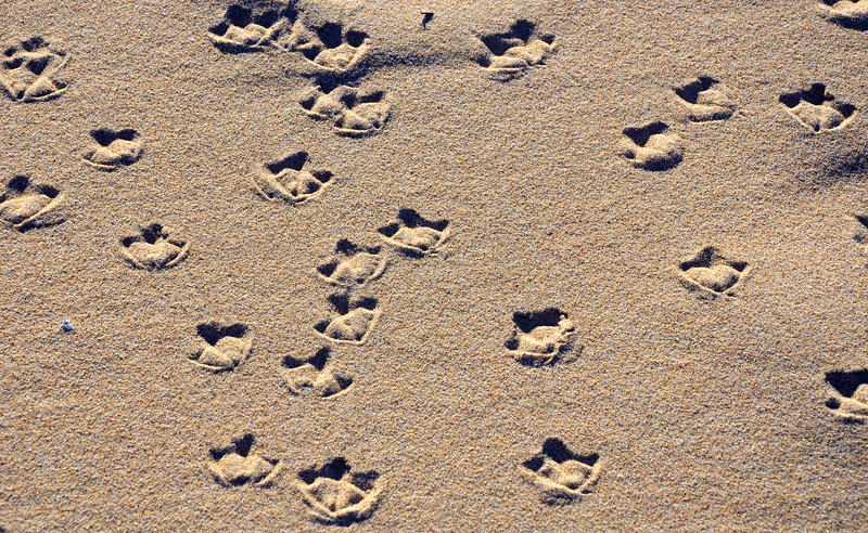 Webbed Footprints