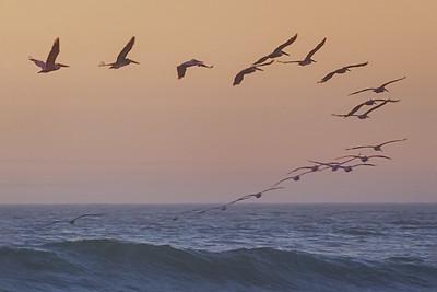Cruisin the Waves