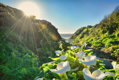 Calla Lily Canyon