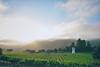 Monterey County Vineyard