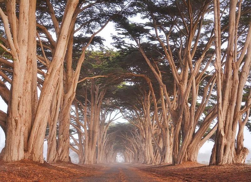 Cypress Tree Tunnel II