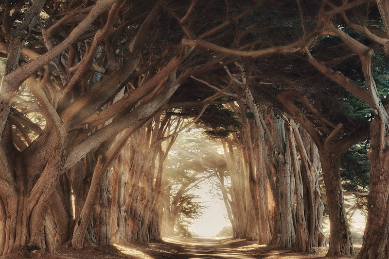 Cypress Tree Tunnel III