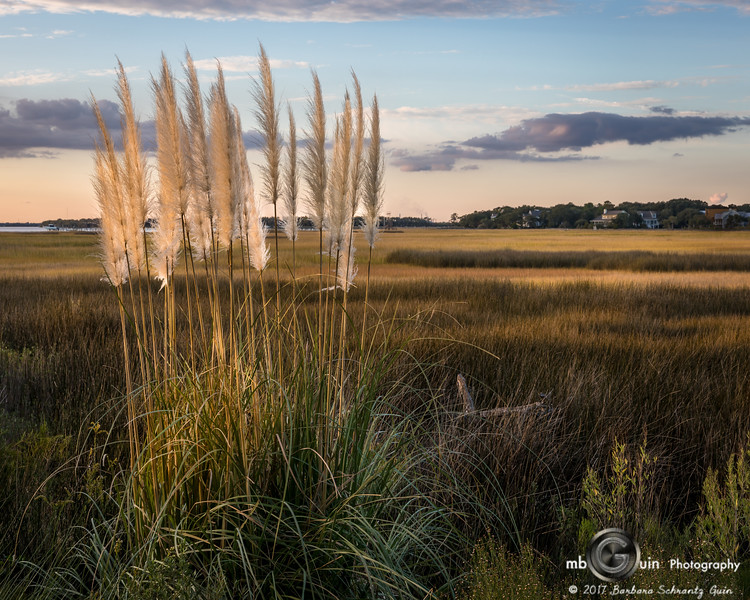 Pampas in the Marsh
