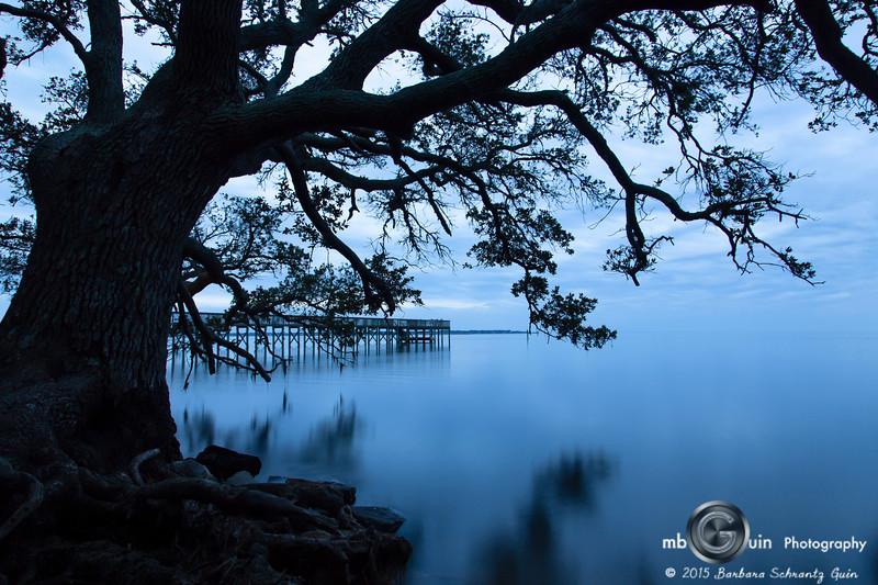 Albermarle Oak