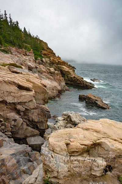 Acadia Summer