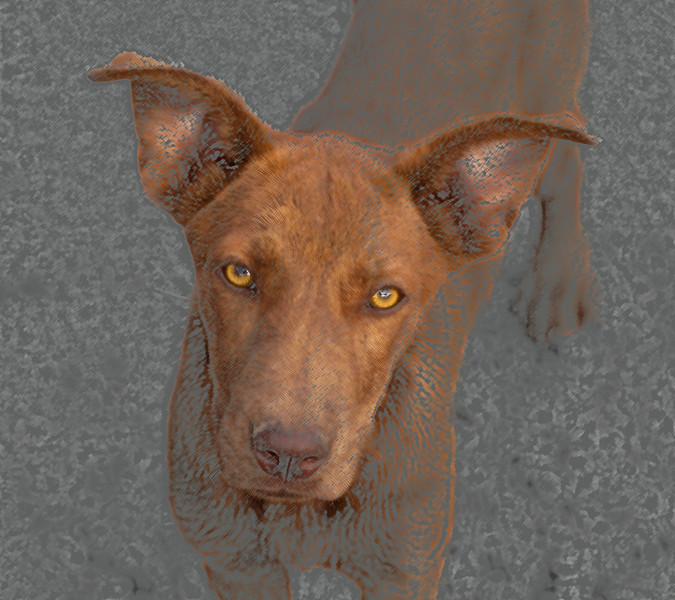 This photo was taken of a Native Americans dog by the Mission San Xavier del Bac near the city of Tucson, Arizona. The dog was about a year old and very friendly and appreciated any food we would give her. She was a mix breed but had great eyes. I played with photo in Photo Shop program. Photograph was taken August 2013.