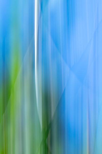 Spring Grass 1