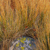 Stone and grasses, Acadia National Park, Maine