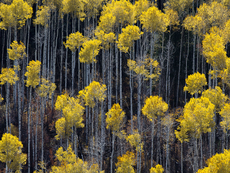 San Juan National Forest, Colorado