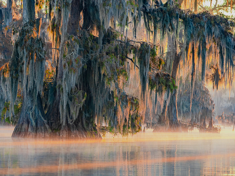 Early morning, Louisiana bayou