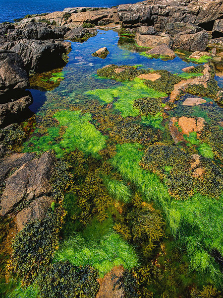 Tide pool, Acadia NP, Maine, yyyy