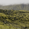 Moss on volcanic rock, Iceland