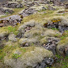 Moss on volcanic rock, Iceland.