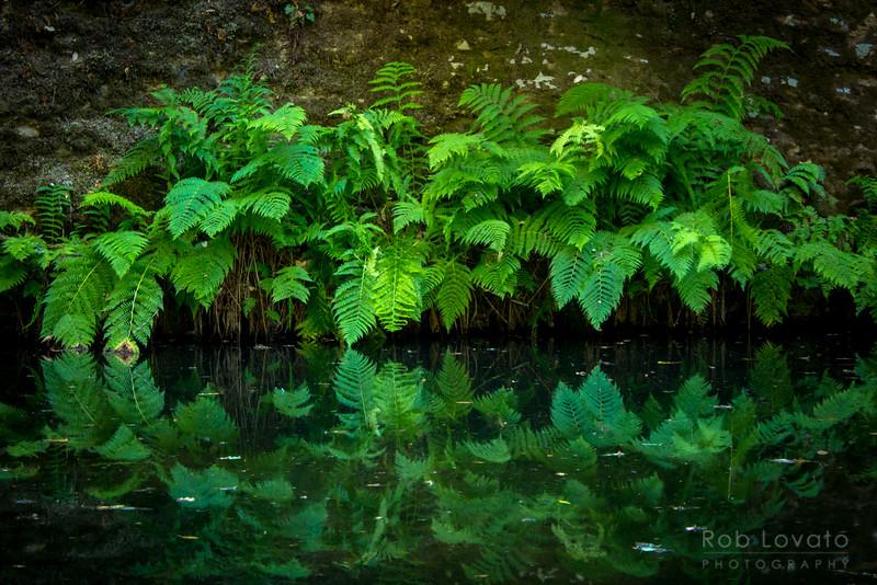Portola Redwoods S.P.