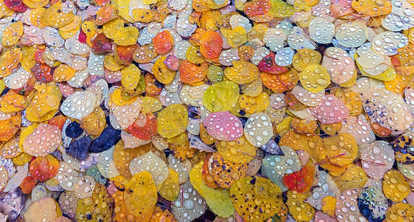 """Autumn Droplets"" (2016)"