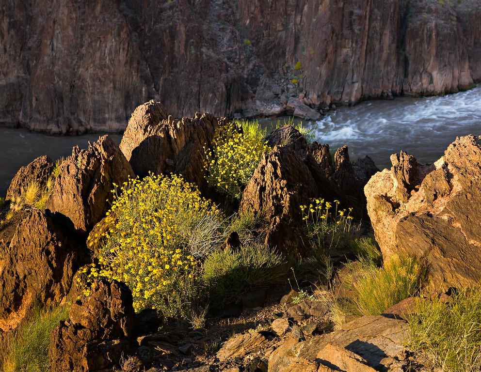 Rapids and Rocks