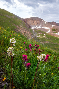 Colorado Wildflowers