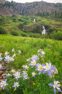 Waterfall and Colorado Blue Columbine