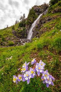 Waterfall and Colorado Blue Columbine