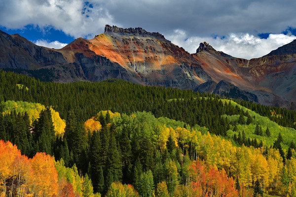 Aspens on a Mountainside