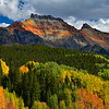 Aspens on a Mountainside