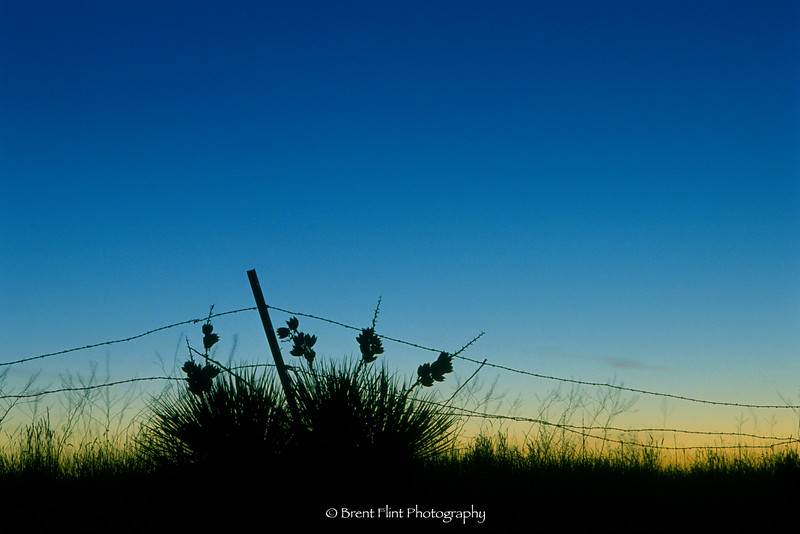 S.2087 - yucca and fence at sunset, Douglas County, CO.