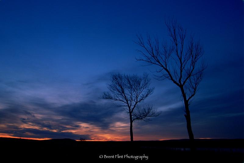 S.1382 - trees at sunrise, Rahmah Reservoir, CO.