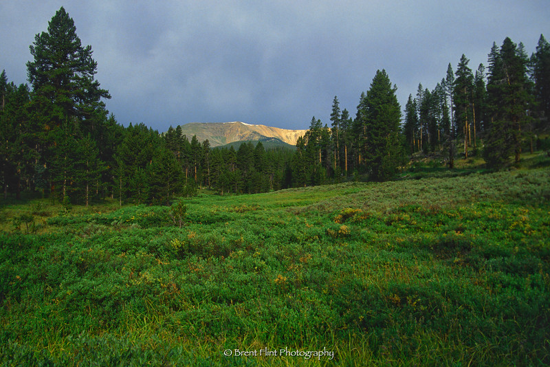S.1721 - Elk Mountain and meadow, Arapaho National Forest, CO.
