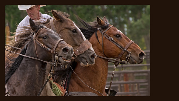 Saddle Bronc with Pick Up Horses