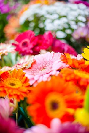 SP_Floral-03