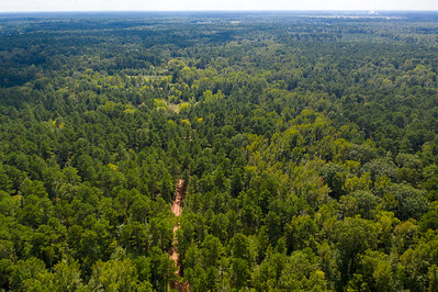 Timberland in Little River County, Arkansas