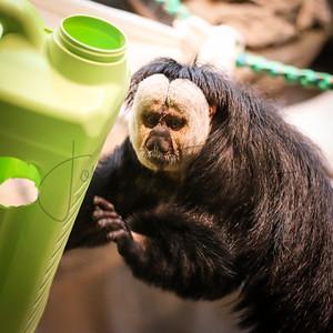Como Park Zoo & Conservatory 2017