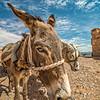 Egyptian Eeyore