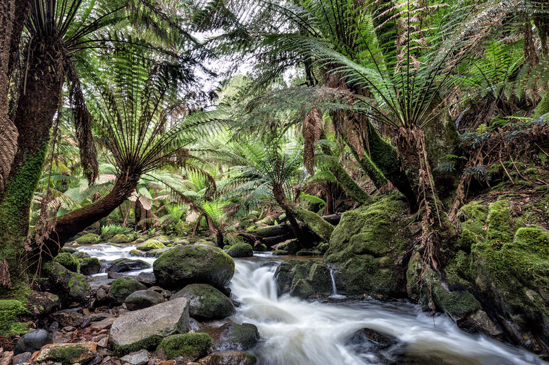 Fern Tree Grotto III