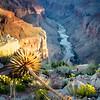 The Canyon, the Colorado, the Century