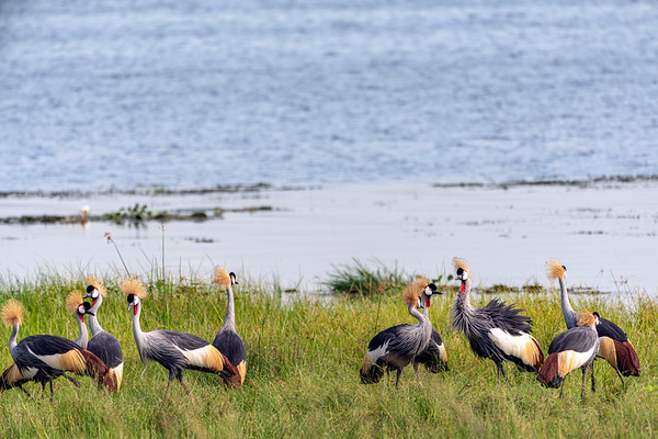 Lakeside Cranes