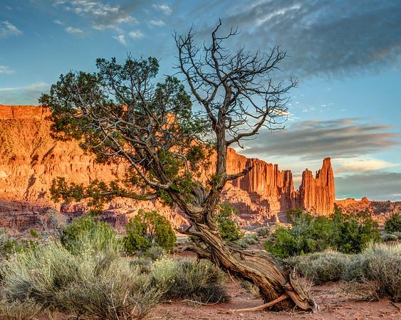 Gnarled Desert Tree at Sunset