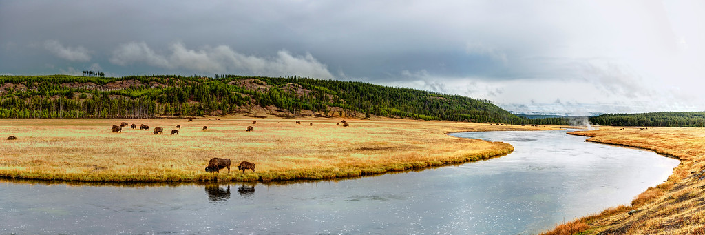 Bison at Firehole River