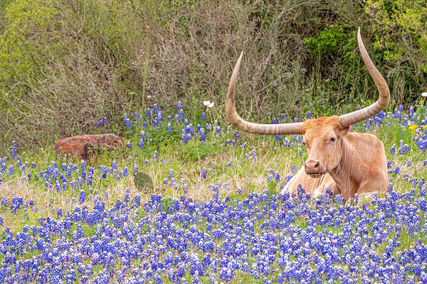 Doesn't Get More Texas than This