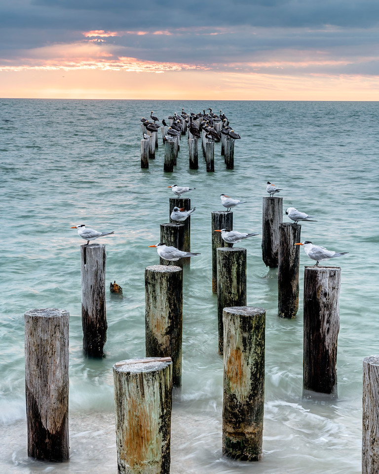 Sea Birds at Abandoned Pier