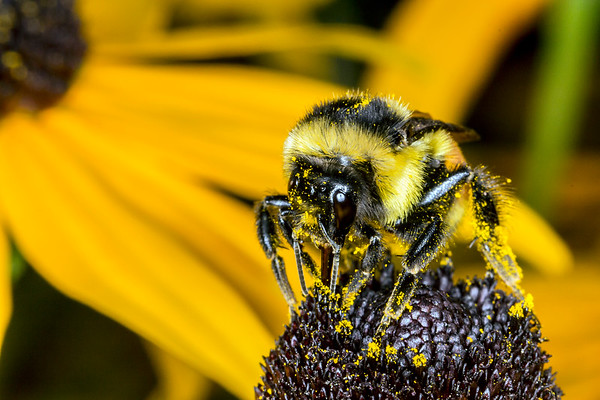 Price Edward Island Bee