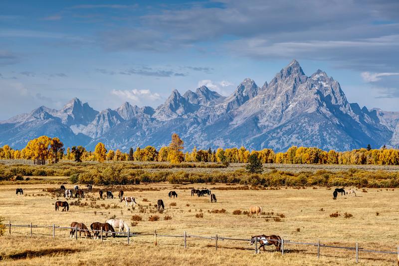 Elk Ranch Flats
