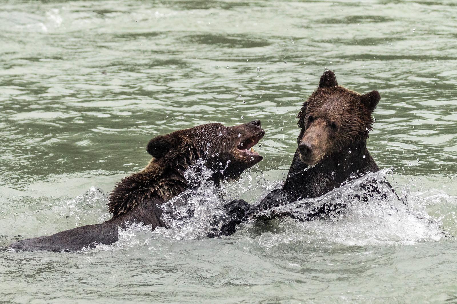 Get Off Me, Bro!