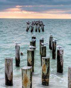 Sea Birds at Abandoned Pier