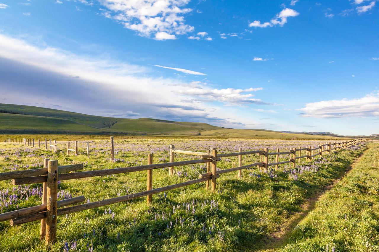 Bighorn Grassland