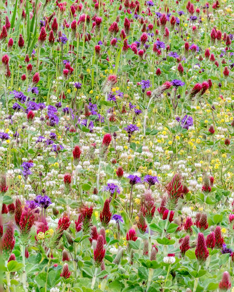 Mississippi Flowers