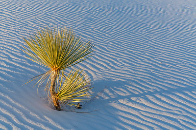 Last Light at White Sands